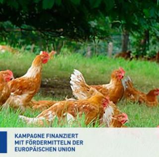 Erstklassig in Europa – EU-Kampagne für Label-Rouge-Geflügel