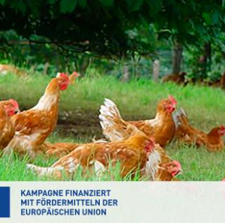 Eerste klasse in Europa – EU-campagne voor pluimvee van Label Rouge